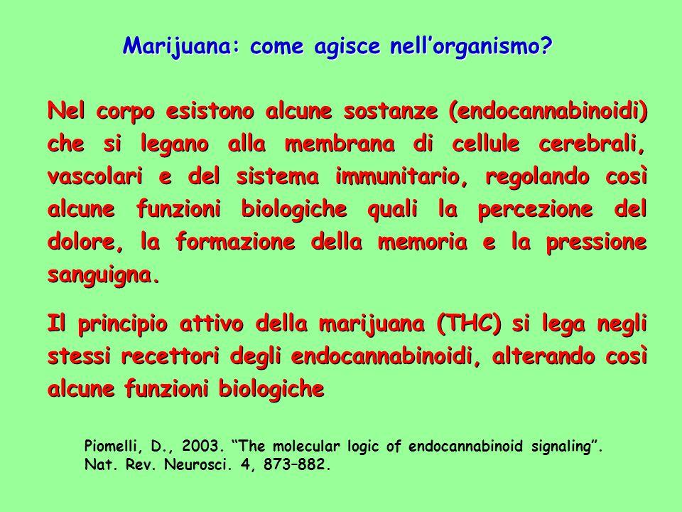 Marijuana: come agisce nell'organismo? Nel corpo esistono alcune sostanze (endocannabinoidi) che si legano alla membrana di cellule cerebrali, vascola