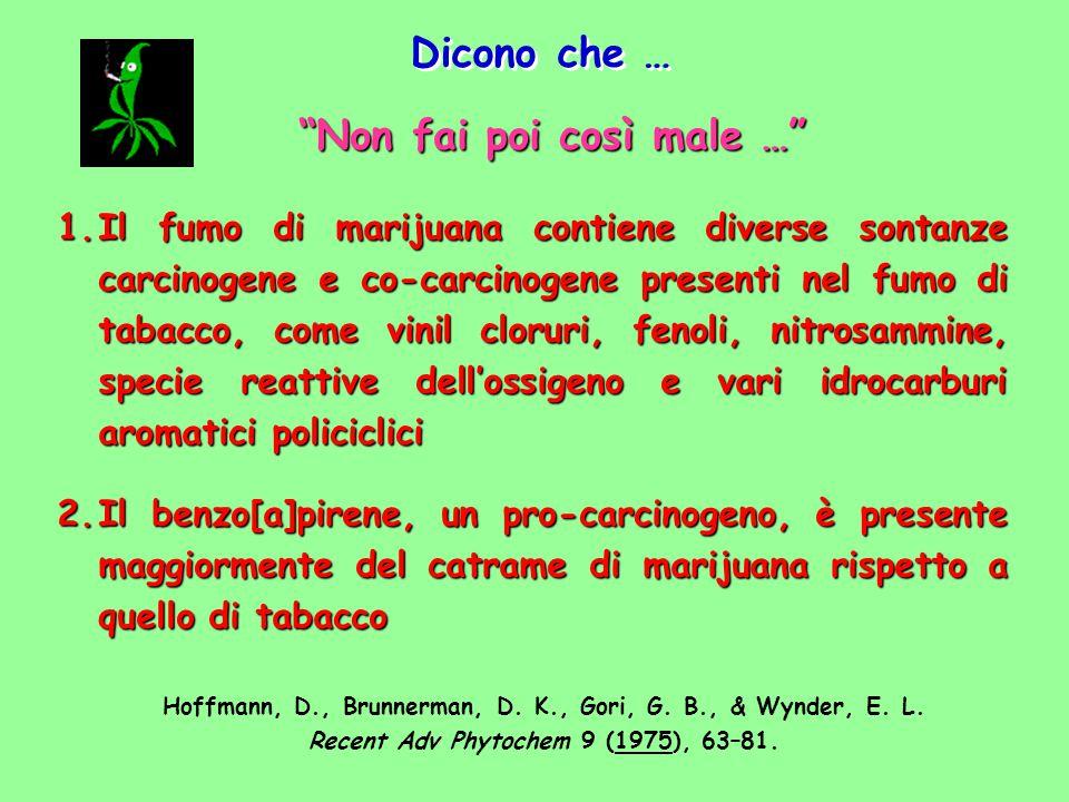 1.Il fumo di marijuana contiene diverse sontanze carcinogene e co-carcinogene presenti nel fumo di tabacco, come vinil cloruri, fenoli, nitrosammine,