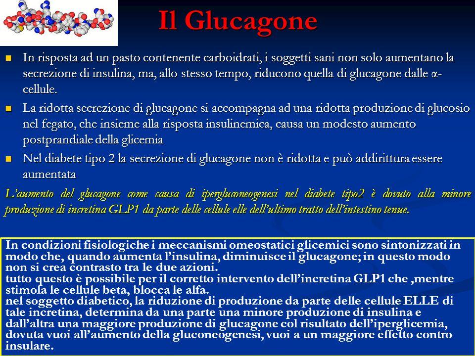 Il Glucagone In risposta ad un pasto contenente carboidrati, i soggetti sani non solo aumentano la secrezione di insulina, ma, allo stesso tempo, ridu