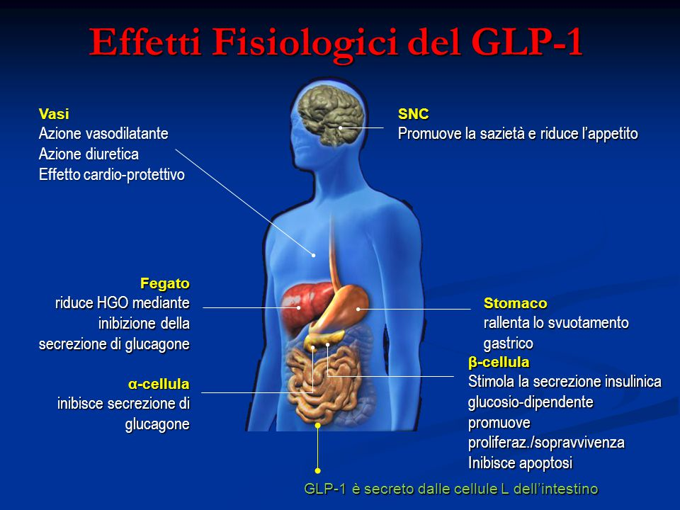 Effetti Fisiologici del GLP-1 SNC Promuove la sazietà e riduce l'appetito Stomaco rallenta lo svuotamento gastrico Fegato riduce HGO mediante inibizio