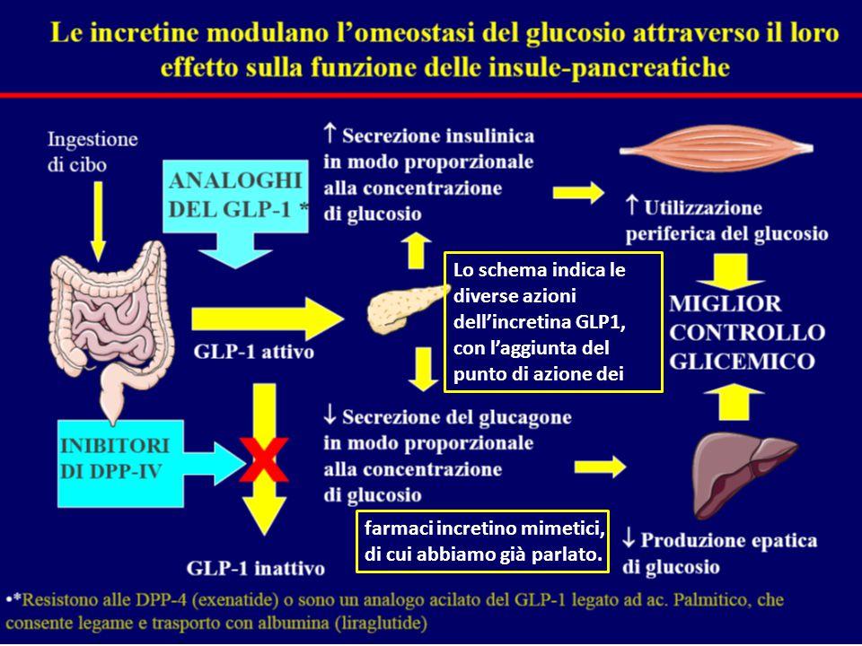 Lo schema indica le diverse azioni dell'incretina GLP1, con l'aggiunta del punto di azione dei farmaci incretino mimetici, di cui abbiamo già parlato.