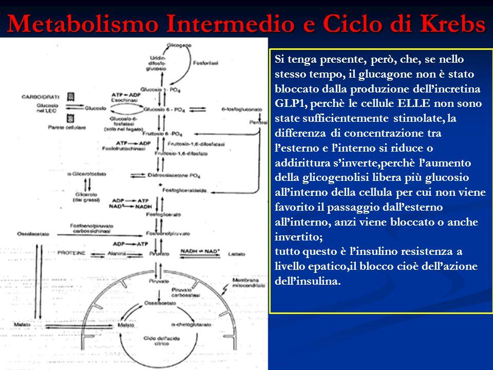 Metabolismo Intermedio e Ciclo di Krebs Fonte:Fisiologia Medica (Ganong) Si tenga presente, però, che, se nello stesso tempo, il glucagone non è stato