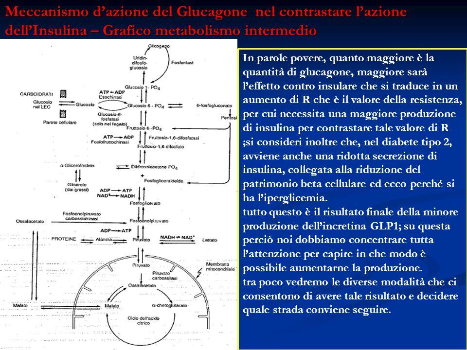 Meccanismo d'azione del Glucagone nel contrastare l'azione dell'Insulina – Grafico metabolismo intermedio In parole povere, quanto maggiore è la quant