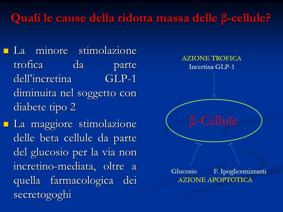 Quali le cause della ridotta massa delle β-cellule? La minore stimolazione trofica da parte dell'incretina GLP-1 diminuita nel soggetto con diabete ti