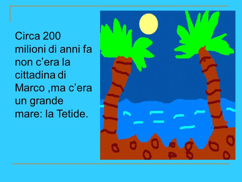 Circa 200 milioni di anni fa non c'era la cittadina di Marco,ma c'era un grande mare: la Tetide.
