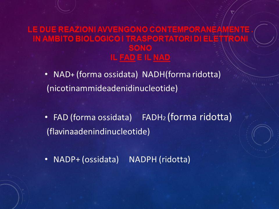 LE DUE REAZIONI AVVENGONO CONTEMPORANEAMENTE. IN AMBITO BIOLOGICO I TRASPORTATORI DI ELETTRONI SONO IL FAD E IL NAD NAD + (forma ossidata) NADH(forma