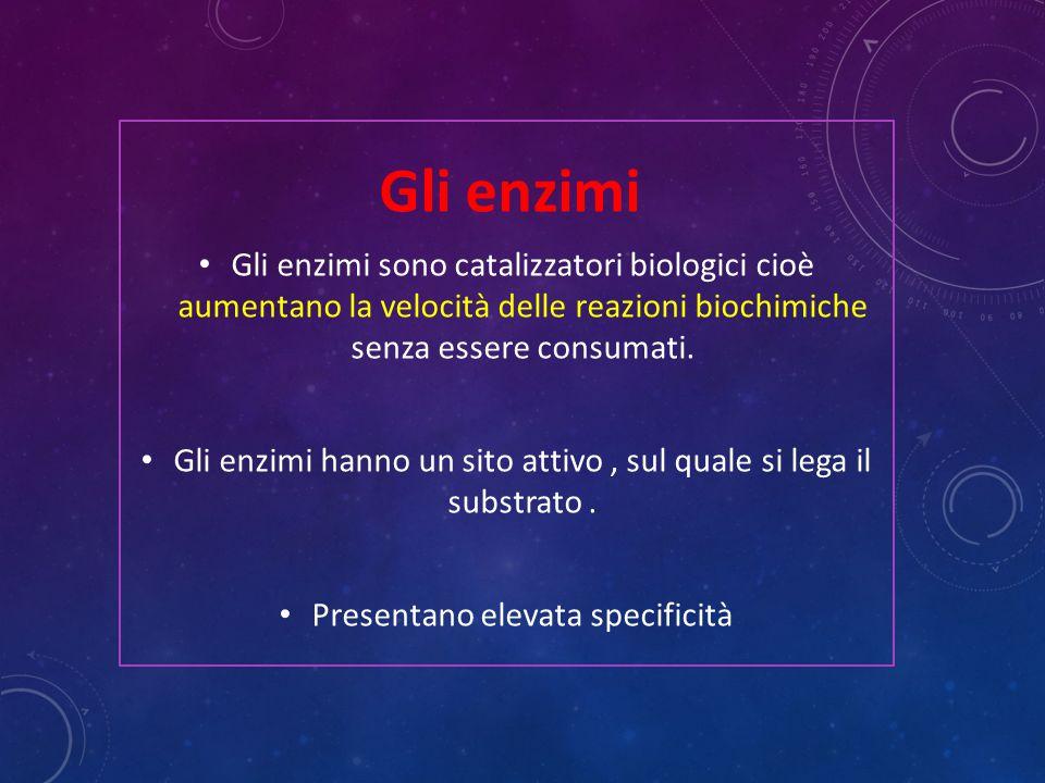Gli enzimi Gli enzimi sono catalizzatori biologici cioè aumentano la velocità delle reazioni biochimiche senza essere consumati. Gli enzimi hanno un s
