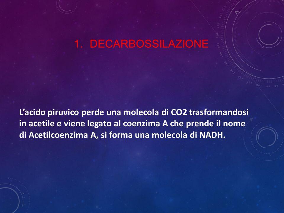 1.DECARBOSSILAZIONE L'acido piruvico perde una molecola di CO2 trasformandosi in acetile e viene legato al coenzima A che prende il nome di Acetilcoen