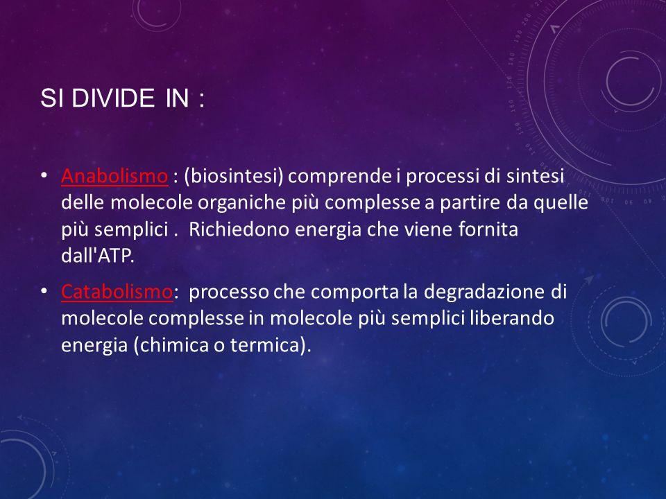 SI DIVIDE IN : Anabolismo : (biosintesi) comprende i processi di sintesi delle molecole organiche più complesse a partire da quelle più semplici. Rich