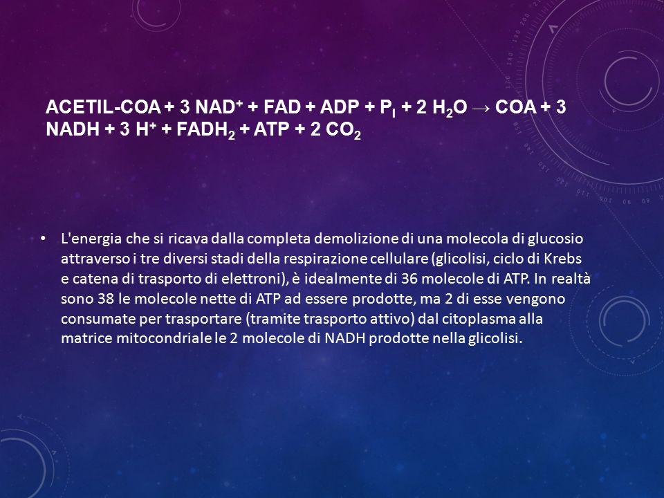 ACETIL-COA + 3 NAD + + FAD + ADP + P I + 2 H 2 O → COA + 3 NADH + 3 H + + FADH 2 + ATP + 2 CO 2 L'energia che si ricava dalla completa demolizione di