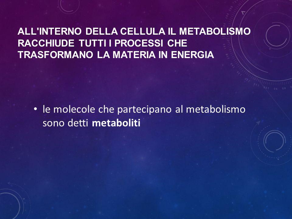 ALL'INTERNO DELLA CELLULA IL METABOLISMO RACCHIUDE TUTTI I PROCESSI CHE TRASFORMANO LA MATERIA IN ENERGIA le molecole che partecipano al metabolismo s