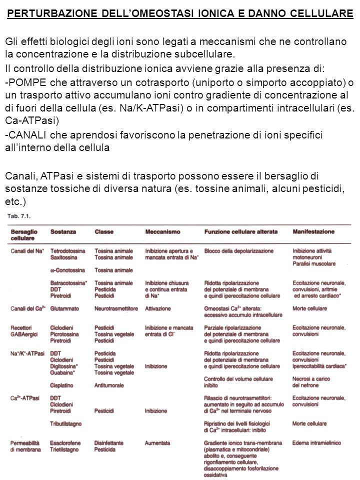IL CALCIO COME MEDIATORE DI TOSSICITA' Il calcio, in relazione alla sua funzione di secondo messaggero, può indurre meccanismi specifici di tossicità attivando proteasi, endonucleasi, fosfolipasi, disturbando la funzionalità mitocondriale ed inducendo attraverso queste vie apoptosi o necrosi.