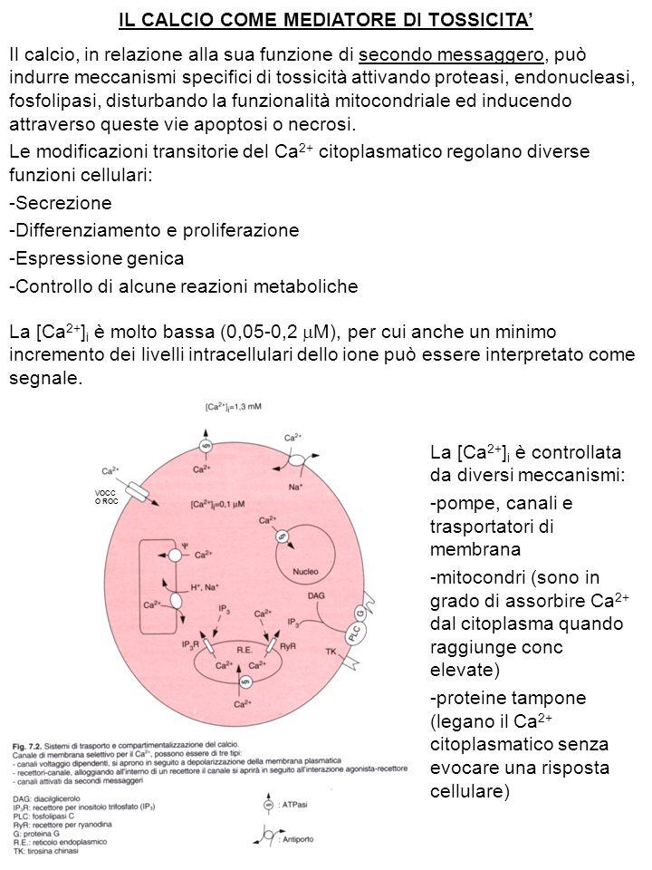 IL CALCIO COME MEDIATORE DI TOSSICITA' Il calcio, in relazione alla sua funzione di secondo messaggero, può indurre meccanismi specifici di tossicità