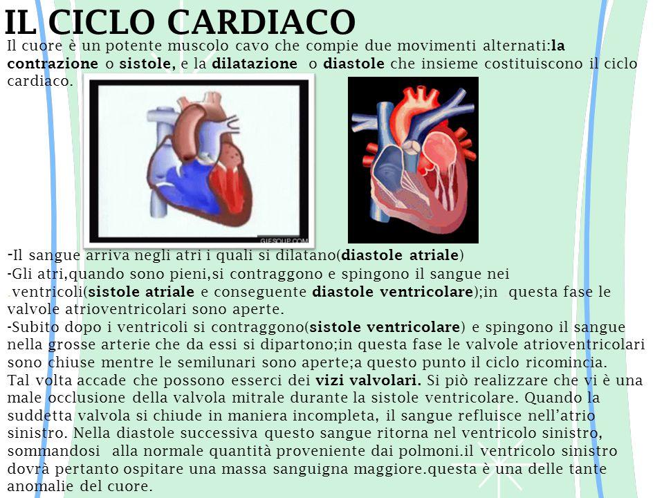 IL CICLO CARDIACO Il cuore è un potente muscolo cavo che compie due movimenti alternati: la contrazione o sistole, e la dilatazione o diastole che ins