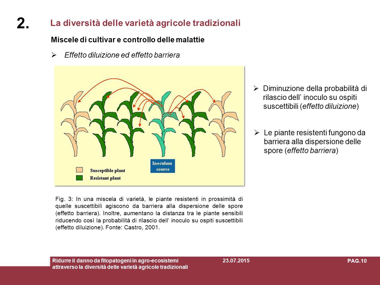 La diversità delle varietà agricole tradizionali 2. Ridurre il danno da fitopatogeni in agro-ecosistemi attraverso la diversità delle varietà agricole