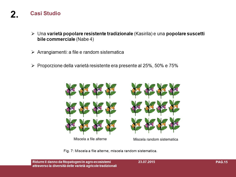 Casi Studio 2.2. Ridurre il danno da fitopatogeni in agro-ecosistemi attraverso la diversità delle varietà agricole tradizionali Fig. 7: Miscela a fil