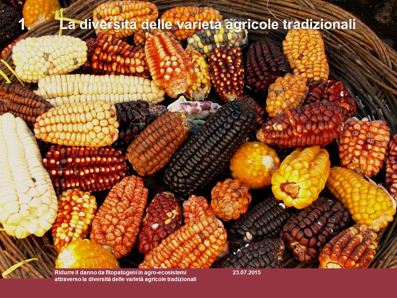 Miscele di varietà tradizionali Ridurre il danno da fitopatogeni in agro-ecosistemi attraverso la diversità delle varietà agricole tradizionali La diversità delle varietà agricole tradizionali 1.1.
