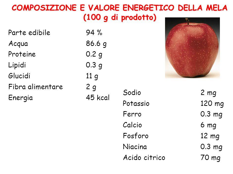COMPOSIZIONE E VALORE ENERGETICO DELLA MELA (100 g di prodotto) Parte edibile94 % Acqua86.6 g Proteine0.2 g Lipidi0.3 g Glucidi11 g Fibra alimentare2