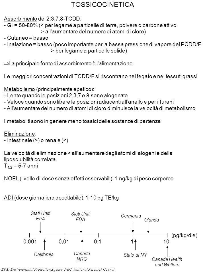 TOSSICOCINETICA Assorbimento del 2,3,7,8-TCDD: - GI = 50-80% (< per legame a particelle di terra, polvere o carbone attivo > all'aumentare del numero