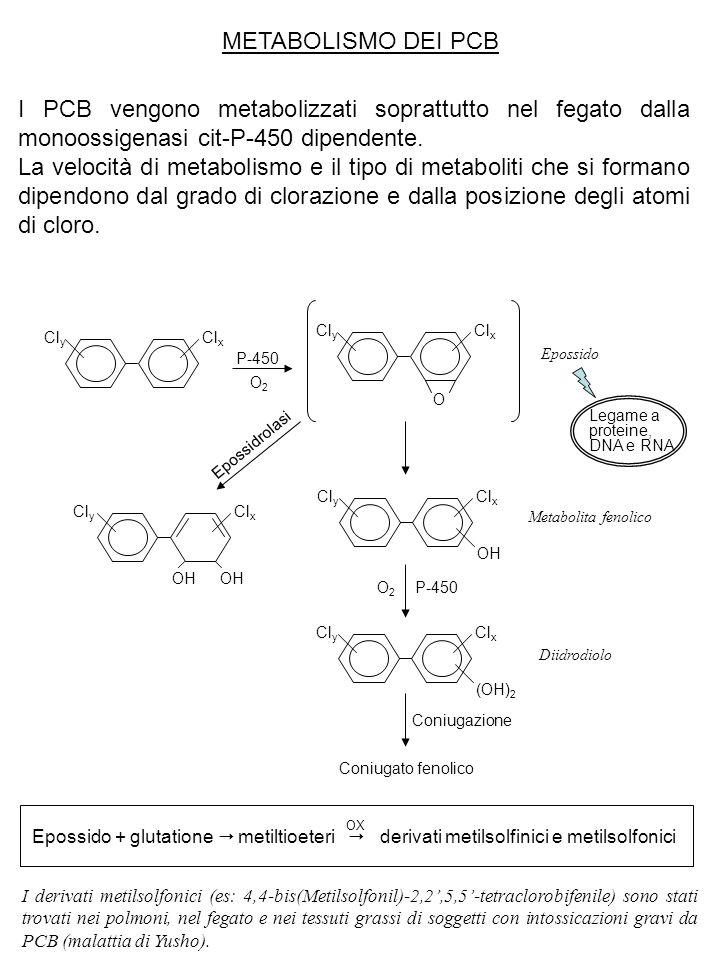METABOLISMO DEI PCB I PCB vengono metabolizzati soprattutto nel fegato dalla monoossigenasi cit-P-450 dipendente. La velocità di metabolismo e il tipo