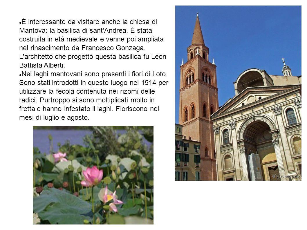 È interessante da visitare anche la chiesa di Mantova: la basilica di sant'Andrea. È stata costruita in età medievale e venne poi ampliata nel rinasci