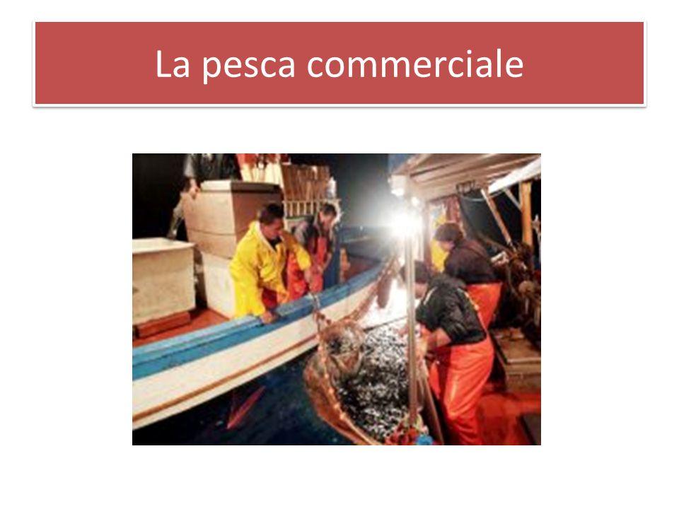 La pesca commerciale