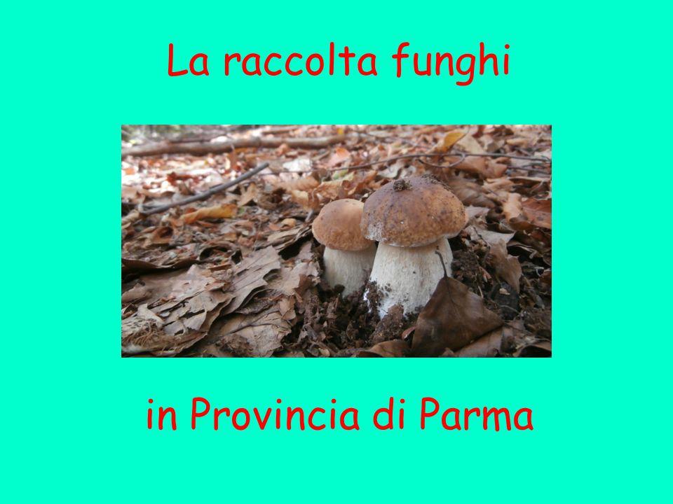 La raccolta funghi in Provincia di Parma