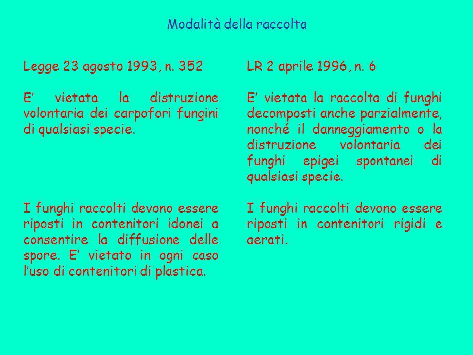 Modalità della raccolta Legge 23 agosto 1993, n. 352 E' vietata la distruzione volontaria dei carpofori fungini di qualsiasi specie. I funghi raccolti