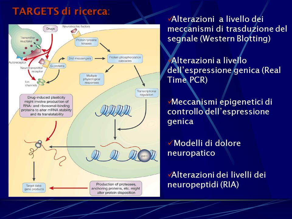 Alterazioni a livello dei meccanismi di trasduzione del segnale (Western Blotting) Alterazioni a livello dell'espressione genica (Real Time PCR) Mecca