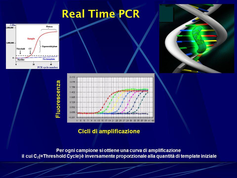 Real Time PCR Per ogni campione si ottiene una curva di amplificazione il cui C T (=Threshold Cycle) è inversamente proporzionale alla quantità di template iniziale Cicli di amplificazione Fluorescenza