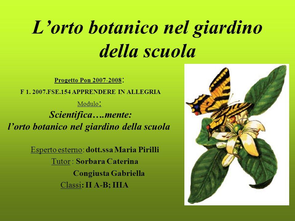 L'orto botanico nel giardino della scuola Esperto esterno: dott.ssa Maria Pirilli Tutor : Sorbara Caterina Congiusta Gabriella Classi: II A-B; IIIA Pr