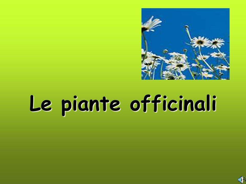 Le piante officinali