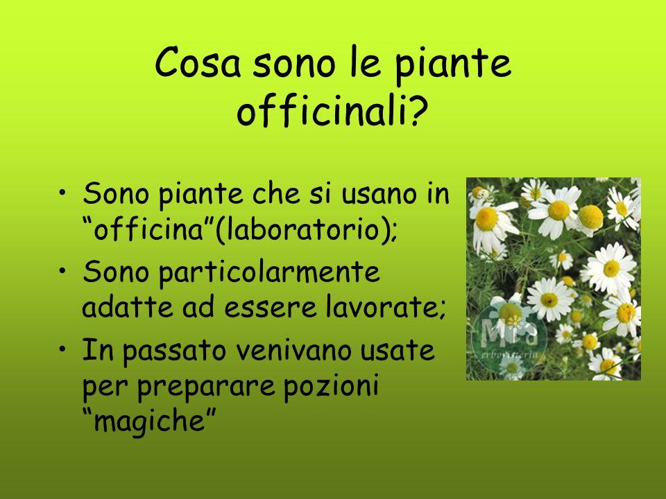 """Cosa sono le piante officinali? Sono piante che si usano in """"officina""""(laboratorio); Sono particolarmente adatte ad essere lavorate; In passato veniva"""