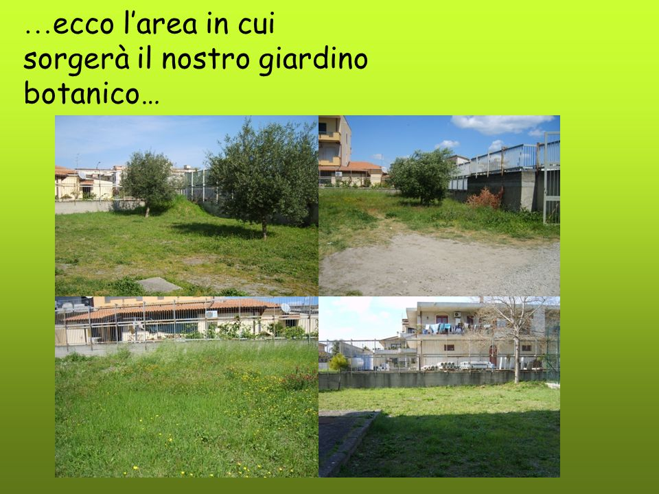… ecco l'area in cui sorgerà il nostro giardino botanico…