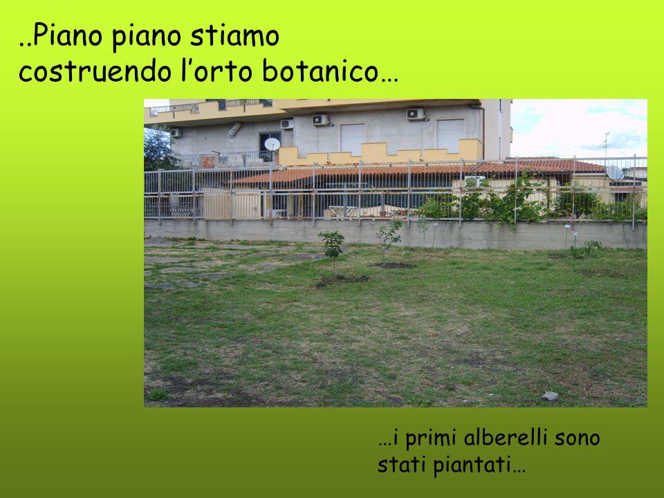 ..Piano piano stiamo costruendo l'orto botanico… …i primi alberelli sono stati piantati…