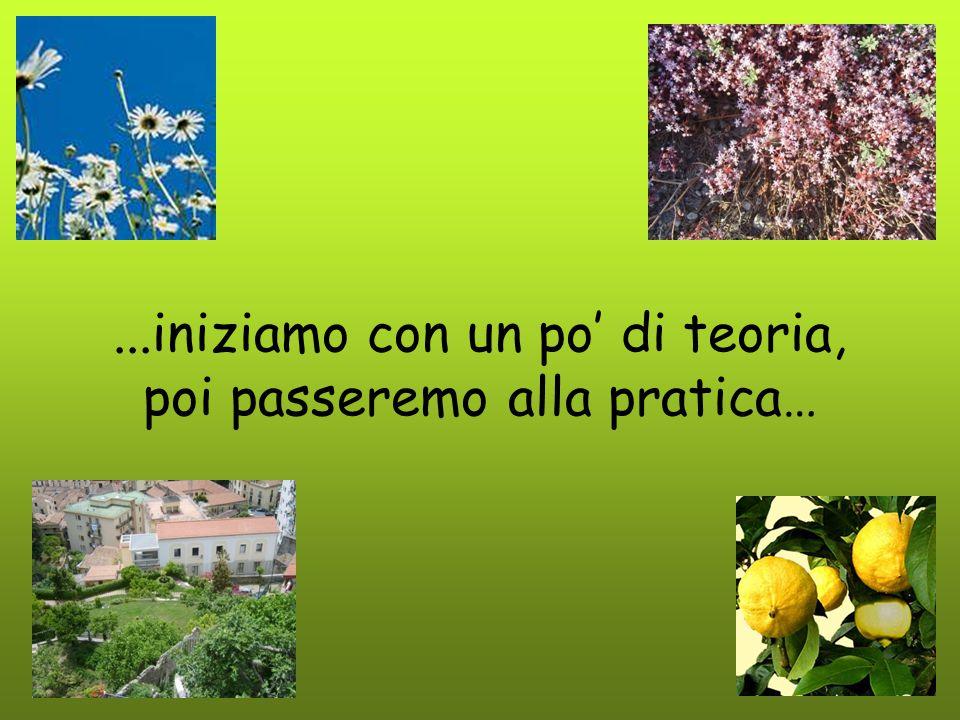 La foglia È un organo vitale per la pianta funzioni respirazionefotosintesi