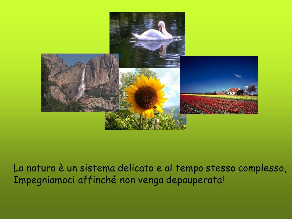 La natura è un sistema delicato e al tempo stesso complesso, Impegniamoci affinché non venga depauperata!