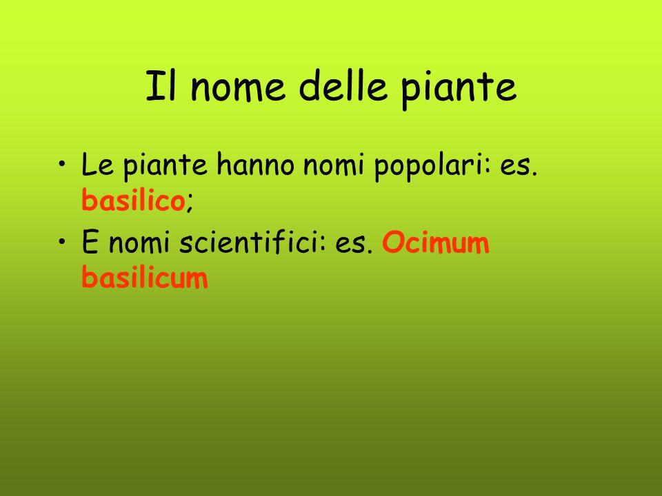Il nome delle piante Le piante hanno nomi popolari: es. basilico; E nomi scientifici: es. Ocimum basilicum