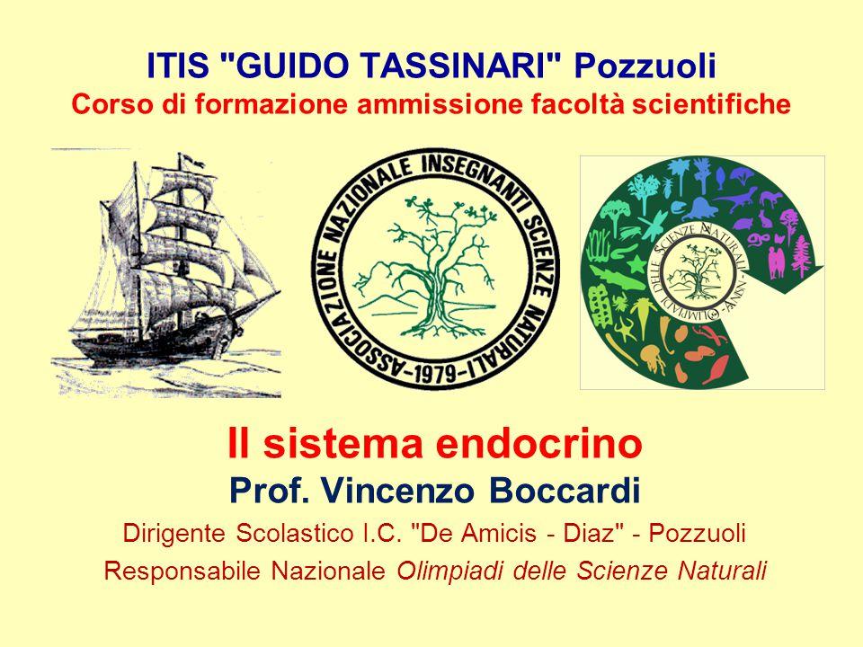 ITIS GUIDO TASSINARI Pozzuoli Corso di formazione ammissione facoltà scientifiche Il sistema endocrino Prof.