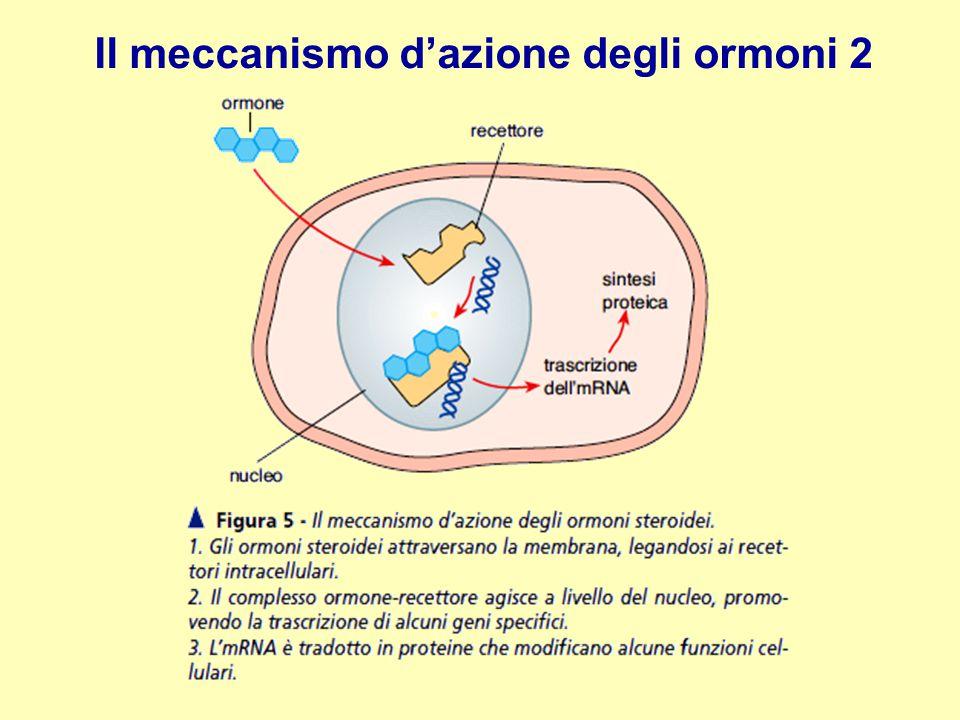 Il meccanismo d'azione degli ormoni 2