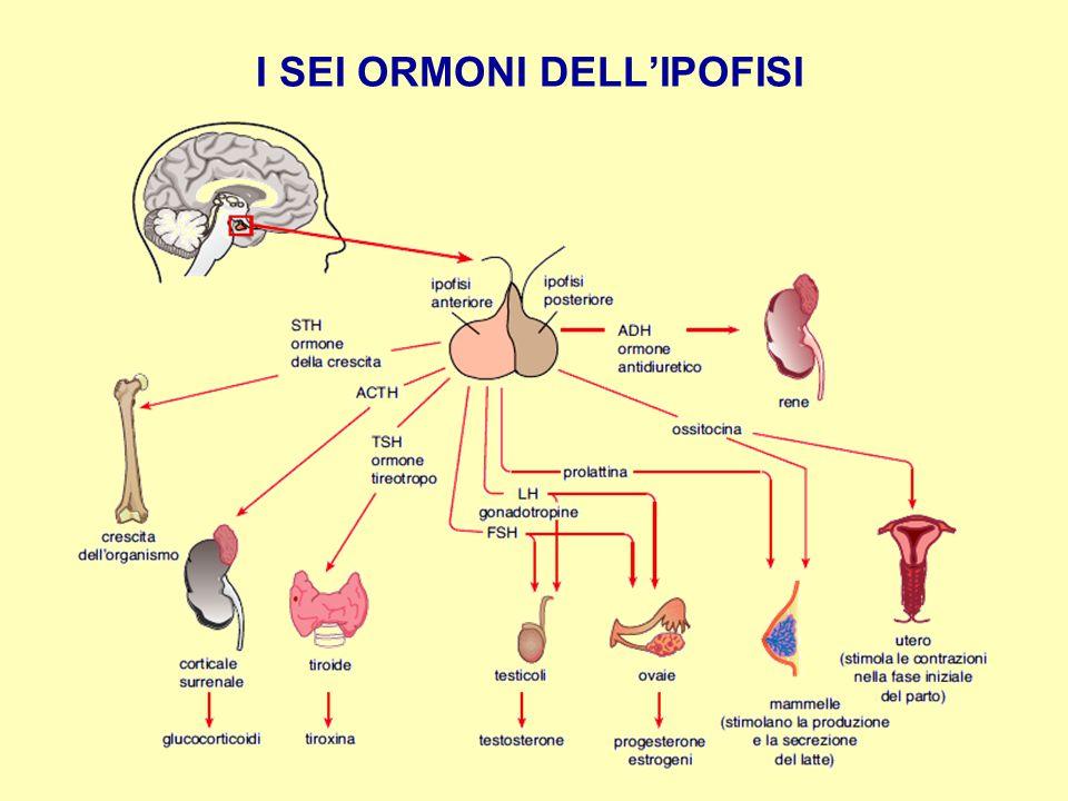 I SEI ORMONI DELL'IPOFISI