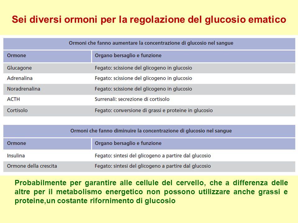 Sei diversi ormoni per la regolazione del glucosio ematico Probabilmente per garantire alle cellule del cervello, che a differenza delle altre per il