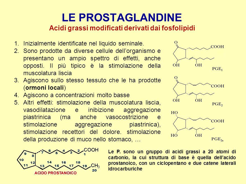 LE PROSTAGLANDINE Acidi grassi modificati derivati dai fosfolipidi 1.Inizialmente identificate nel liquido seminale. 2.Sono prodotte da diverse cellul