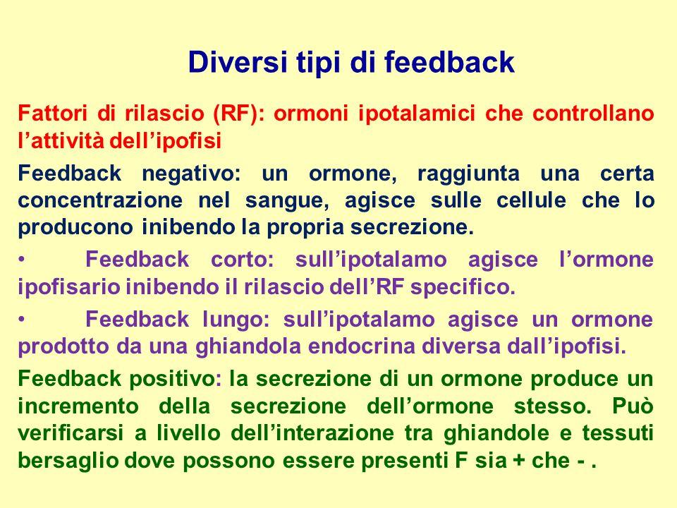 Diversi tipi di feedback Fattori di rilascio (RF): ormoni ipotalamici che controllano l'attività dell'ipofisi Feedback negativo: un ormone, raggiunta
