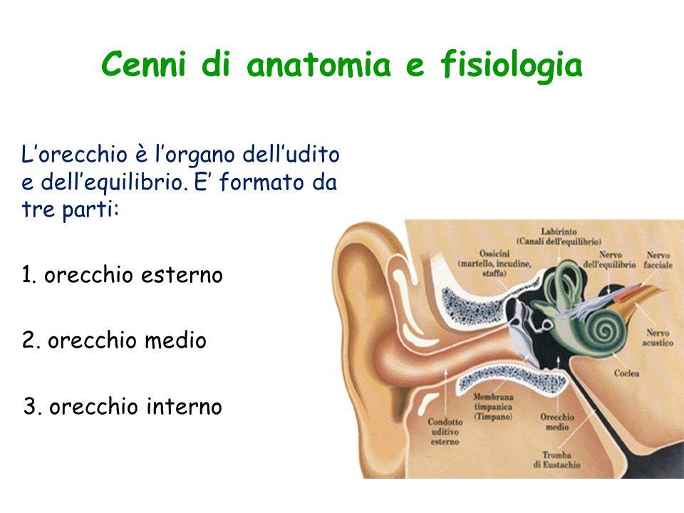 Cenni di anatomia e fisiologia L'orecchio è l'organo dell'udito e dell'equilibrio. E' formato da tre parti: 1. orecchio esterno 2. orecchio medio 3. o