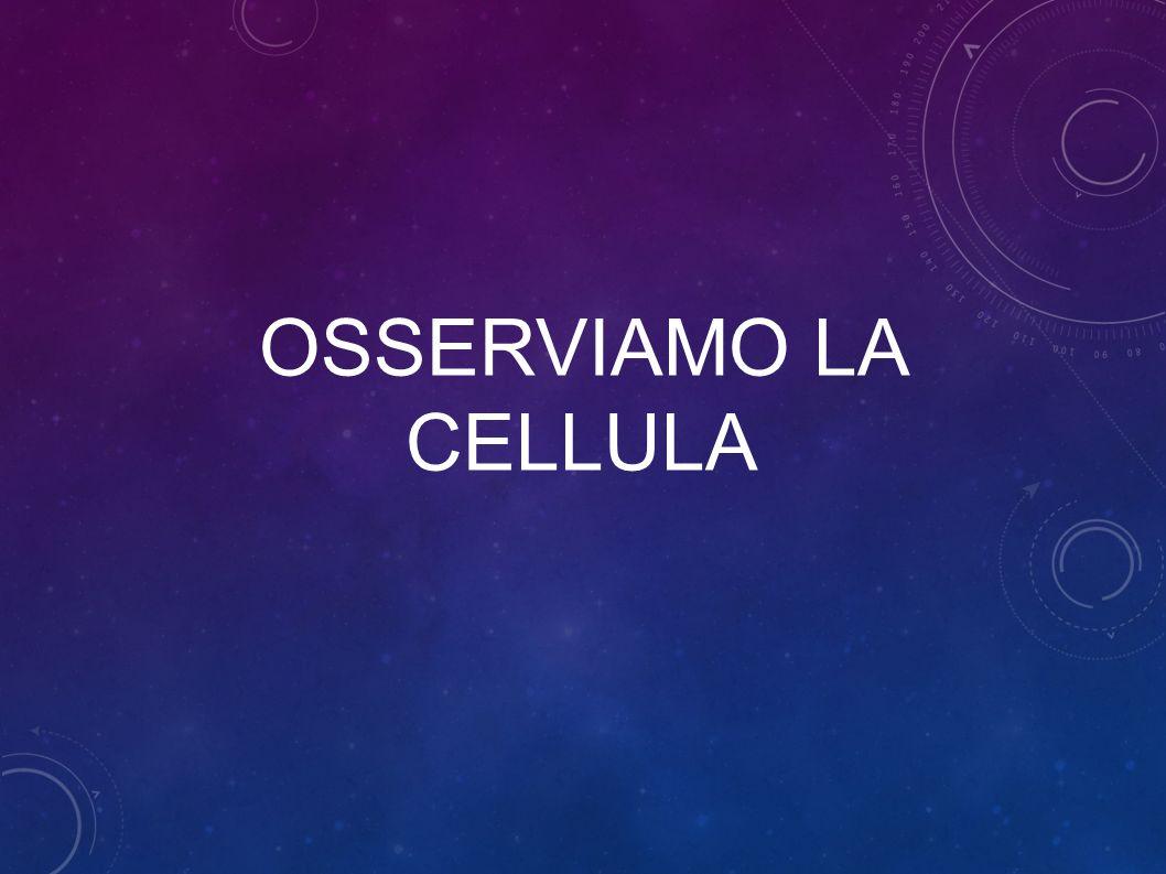 OSSERVIAMO LA CELLULA
