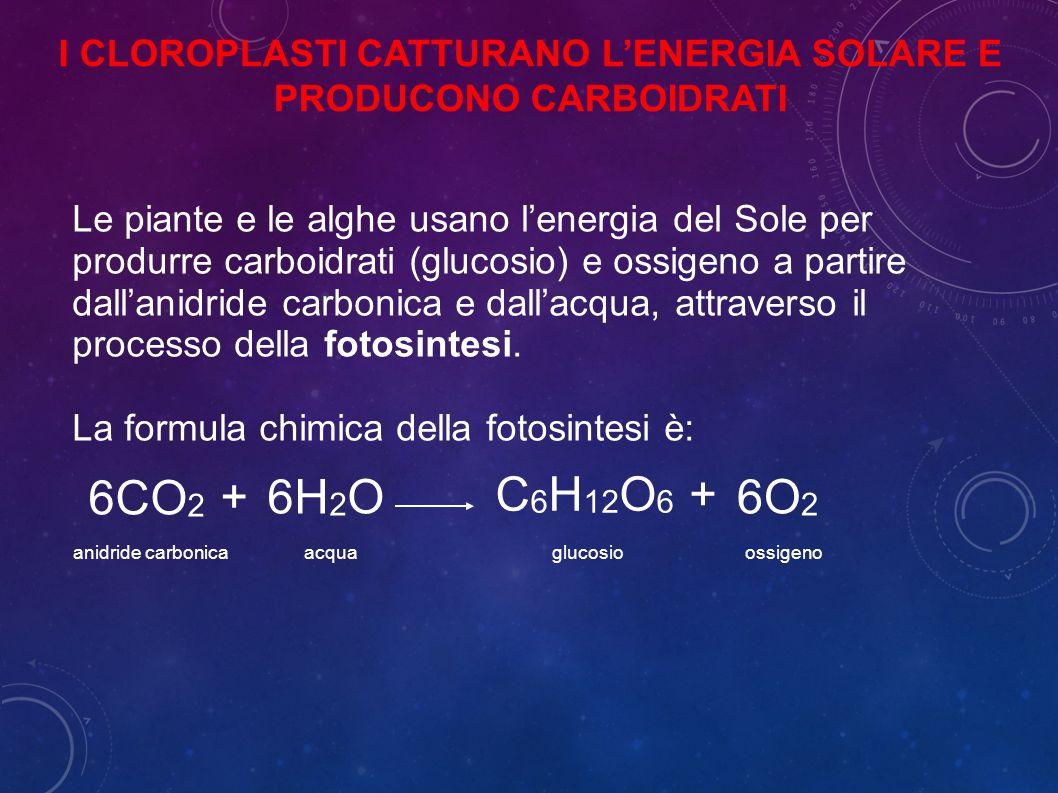 Le piante e le alghe usano l'energia del Sole per produrre carboidrati (glucosio) e ossigeno a partire dall'anidride carbonica e dall'acqua, attraverso il processo della fotosintesi.