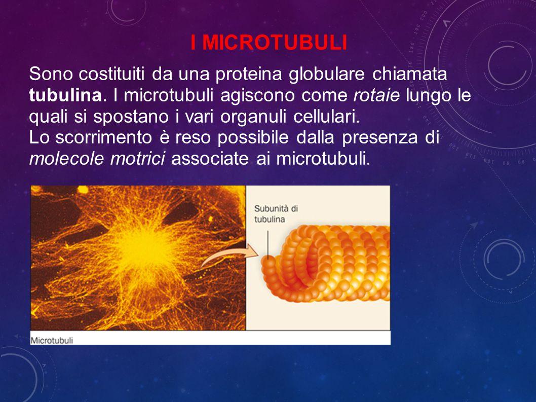 Sono costituiti da una proteina globulare chiamata tubulina.