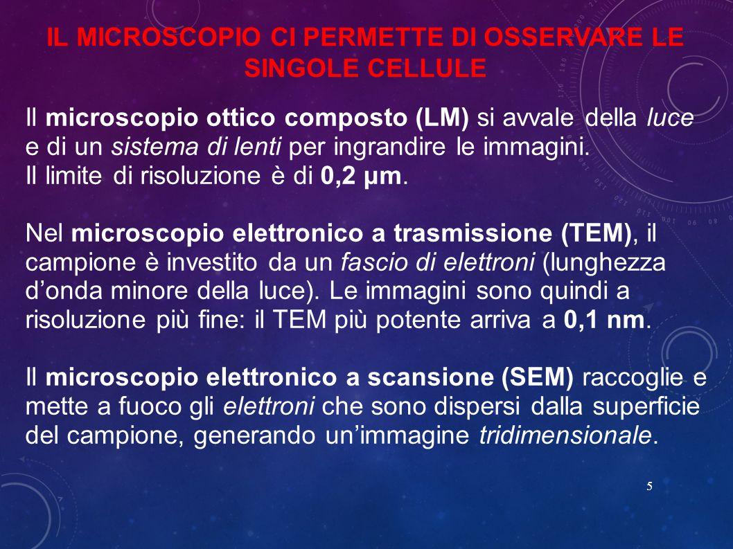 IL MICROSCOPIO CI PERMETTE DI OSSERVARE LE SINGOLE CELLULE 5 Il microscopio ottico composto (LM) si avvale della luce e di un sistema di lenti per ingrandire le immagini.