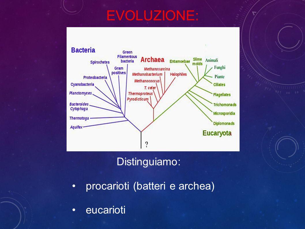 Distinguiamo: procarioti (batteri e archea) eucarioti EVOLUZIONE: